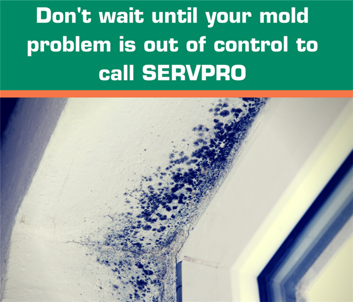 Mold Remediation Do You Know What Mold Is?